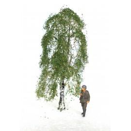 bříza - 8 cm
